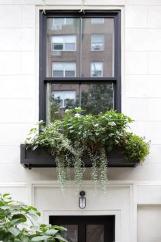 True Blue: A Jolt of Color Enlivens a Manhattan Townhouse Garden Window boxes planted with Torenia ' Window Box Plants, Window Box Flowers, Window Planter Boxes, Planter Ideas, Flower Boxes, Townhouse Garden, Garden Windows, Modern Windows, Succulents In Containers