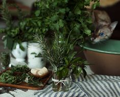 ~Gardenista storing fresh herbs~  5 easy ways to make fresh herbs last longer from The Chalkboard