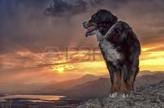 Dog at the top of a mountain in a beautiful sunset
