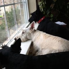 Awwwww!   Reminds me of Lorna, Gus, and Abby at Marilyn's and Bob's bedroom window.