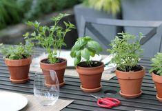 Como cultivar seu tempero em casa – O guia completo