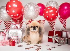 Wagworld CEO, Lulu-Belle, is turning 10 and we are giving away Five Castle Hampers!