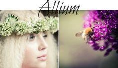 Flower School – Summer Seasonal Flowers with Campbell's Flowers - Allium