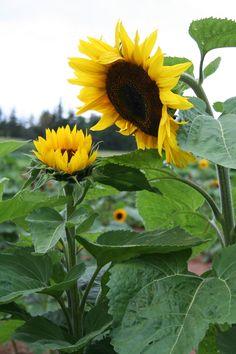 flowers charlottetown pei canada