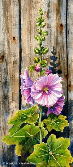 "Varvara Harmon - Artist and Illustrator - Original Paintings, Watercolors ""HollyHocks"" one of my favorite flowers. Watercolor Flowers, Watercolor Paintings, Original Paintings, Landscape Paintings, Watercolors, Fence Art, Illustration, Arte Floral, Botanical Art"