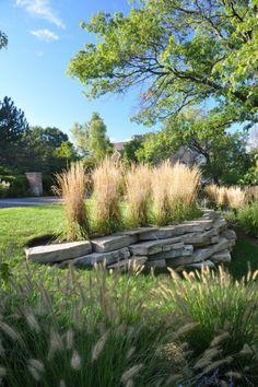 ▷ Eine tolle Pflanze für Ihren Garten: das Lampenputzergras