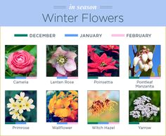 Flowers can be picky about when they grow. Learn which flowers thrive in which season with our seasonal flower guide. Spring Flowers Names, Avas Flowers, Flower Names, Fall Flowers, Summer Flowers, Paper Flowers, Beautiful Flowers, Winter Flowers In Season, Seasonal Flowers