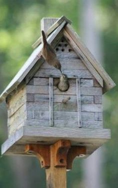 Don't put a perch below the entrance. Guests don't need, but the bad guys use it to reach inside farther. No perches. Note this parent isn't using one. #buildabirdhouse #birdhousetips