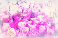 the magic of columbia road flower market in london #columbiaroadflowermarket #roses #pinkmagic #flowers