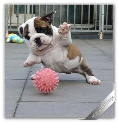get the ball:) from your friends at k9katelynn:)