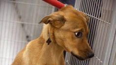 Abaixo-assinado · Assine contra a eutanásia de animais saudáveis nos centros de controle de Zoonoses! · Change.org
