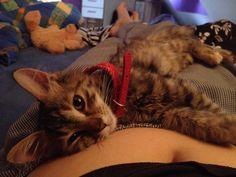 Little Mimi :)
