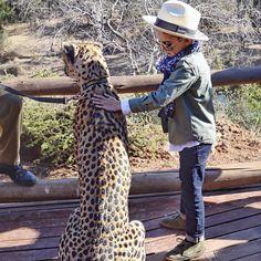 """""""Mom, can we pleaseee bring him home?"""" // #MaybeNot #HereKittyKitty #AdiosAfrica #ChesterCheetah"""