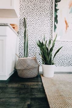 Basket for plants. Also, I'm a big fan of these large plants. Small leaved ones make the room seem smaller to me, but these large geometric ones seem like an architectural addition.