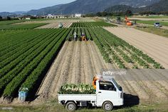 Farmers harvest Daikon radishes at a field in Tatsuno, Hyogo Prefecture, Japan, on Wednesday, Nov. 2, 2016. Unusually poor weather in western Japan and a rise in food prices, particularly for vegetables, in September suggest risk of a downside surprise in Japan's household spending. Photographer: Buddhika Weerasinghe/Bloomberg via Getty Images Nov 2, September, Japanese Farmer, Hyogo, Farmers, Wednesday, Westerns, Harvest, Household