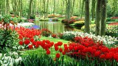 Gambar Taman Bunga Tulip Yang Menawan