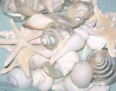Beach Wedding 15 Large Shells and Starfish por SeashellCollection