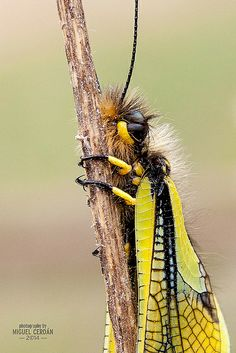 18052014-_MG_5183 | Flickr: Intercambio de fotos Wildlife, Nature, Animals, Beauty, Scouts, Naturaleza, Scenery, Photos, Animais