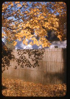 Lyonel Feininger, Autumn trees, 1940s-1950s, Harvard Art Museums/Busch-Reisinger Museum.