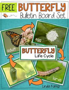 FREE Butterfly life cycle bulletin board set.  Use these as science charts on your bulletin board or as a butterfly sequencing activity in a pocket chart during while learning about butterflies.