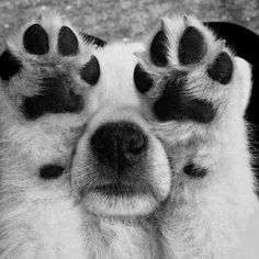 Puppy toes. ~ Cute puppy and dog
