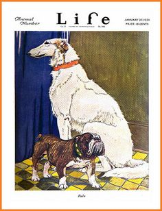1921 January 27, COVER - LIfe - 'Pals'  (Dogs)  by Charles Livingston Bull | by carlylehold