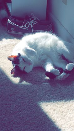 When the sunlight hits just right http://ift.tt/2nWIgaZ