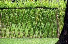 Levande staket i flätad pil