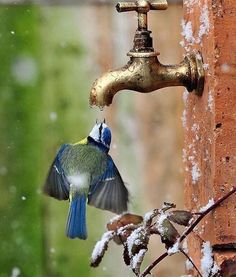 Amazing how these beautiful birds can find water if they need it, even if it is from a faucet! Amazing how these beautiful birds can find water if they need it, even if it is from a faucet! Pretty Birds, Beautiful Birds, Animals Beautiful, Beautiful Pictures, Pretty Flowers, Blue Flowers, Nature Animals, Animals And Pets, Cute Animals