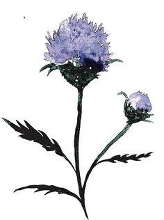 Scottish Thistle- Watercolor, flower, purple, minimalist, nature,wildflower, art print,thistle, via Etsy