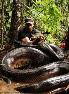 Giant: Paul Rosolie pictured with an anaconda for his television programme, Eaten Alive. G...
