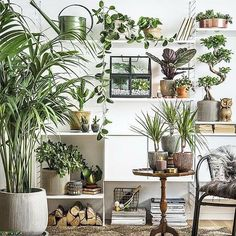 Plant Stand Design Ideas for Indoor Houseplants - Page 41 of 67 - LoveIn Home Living Room Plants, Bedroom Plants, Living Room Interior, Home Interior, Bedroom Decor, Interior Design, Tropical Houses, Tropical Decor, Tropical Furniture