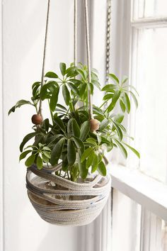 Assembly Home Coil Hanging Planter - Urban Outfitters