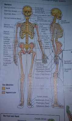 Medical terminology. Anatomy
