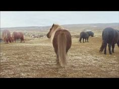 Four Ponies Walk Casually Onto The Screen, Now Keep Your Eyes On The One In The Middle – AWM