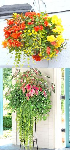 How to plant beautiful hanging baskets that last for months. Choose the best plants from these 15 designer plant lists for hanging flower baskets in sun or shade, plus easy care tips on soil, water and fertilizer for a healthy hanging basket! Hanging Plants Outdoor, Plants For Hanging Baskets, Hanging Flowers, Hanging Gardens, Plants Indoor, Diy Flowers, Sun Plants, Cool Plants, Potted Plants