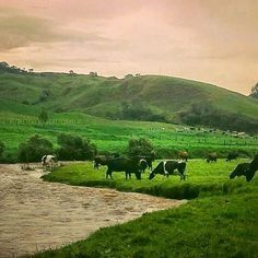 Shared by belmiraenfotografias #landscape #contratahotel (o) http://ift.tt/28QlY6c foto es cortesía de @omartobonr #estampas #bellezasnaturales #antioquiaenfotos #antioquiaenfotografías #antioquiaenfotos #nikonphotography #nikonphotographers #nikonphotography #nikon #cannon #canonphotography #cannonphoto #antioquia #antioquiaenfotografías #colombia #colombianatural #belmira#belmiraantioquia #paramodebelmira #páramodebelmira #norteantioqueño #medellincolombia #ganaderia#rios#paisajes