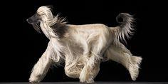 Amazing Dog Photos from Tim Flach