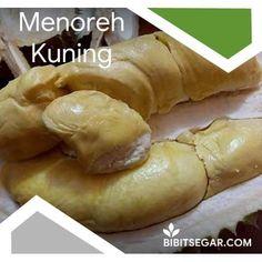 Jual Bibit Durian Super / Musang King / Bawor / Montong / Merah / Duri Hitam BIBIT DURIAN SEGAR - Garlic, Vegetables, Food, Meal, Essen, Vegetable Recipes, Hoods, Meals, Eten
