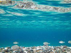 Tilos Island close to Rhodes Amazing Photos, Cool Photos, Visit Greece, Flora And Fauna, Travel And Leisure, Greece Travel, Greek Islands, Rhodes, Countries Of The World