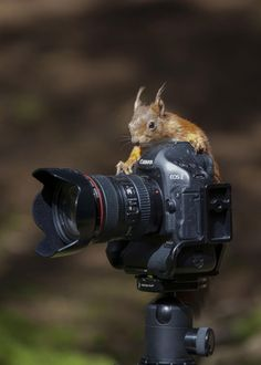 Animals and Cameras Mashup | Friday Foto Funnies