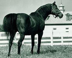 Citation: 1948 Triple Crown Winner, Horse of the Year, Thoroughbred Horse Racing's First Millionare. 45 starts, 32 wins, 10 seconds, 2 thirds.