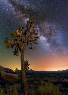The Joshua Tree by Wayne Pinkston on 500px.... #sky #night #tree #stars #california #longexposure #star #cosmos #joshuatree #nationalpark #milkyway #astrophotography #wideangle #nightsky #milkyway #galaxy #joshuatreenationalpark #nightphotography #nightscape #nightlandscape #starrynight