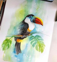 New Bird Artwork Painting Watercolour 19 Ideas Watercolor Sketchbook, Watercolor Bird, Watercolor Drawing, Watercolor Animals, Watercolor Illustration, Painting Illustrations, Bird Artwork, Animal Paintings, Bird Paintings