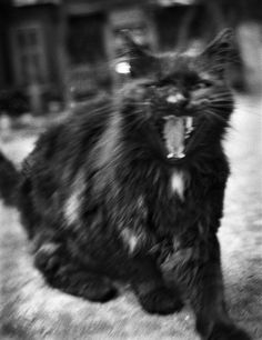 Sevasblog : Things I like: Evil Cats in the service of the Dark Lord