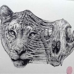 Animals Leave Their Skeletons Behind, Lion by Paul Jackson