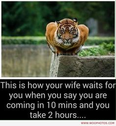 awesome Angry wife waiting