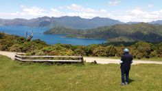 View into the Pelorus Sounds from the main road to French Pass French Pass, Marlborough Sounds, The Locals, Wildlife, Tours, Island, Mountains, History, Places