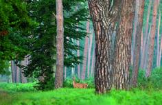 Forêt de Compiègne 2006   Venez découvrir les forêts de l'Oise !   © Oise Tourisme / Jean-Pierre Gilson Site Art, Beauvais, Oise, Plants, Terrarium Cactus, Week End, Images, Europe, Mood