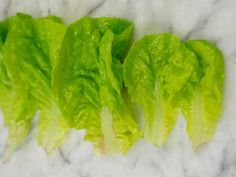 Rather loose heads are petite, 6-8 inches in diameter, Bibb or Butterhead type lettuce seed.